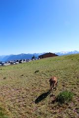 Deer isn't afraid of us at Hurricane Ridge (daveynin) Tags: animal mammal nps parking deer olympic overlook visitorcenter deaftalent deafoutsidetalent deafoutdoortalent