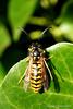 (Jolanda Donné) Tags: fauna schweiz insekten canoneos350ddigital