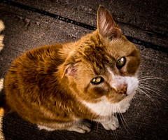 Here Kitty... (gfin) Tags: cat novascotia lundenburg novascotia2014