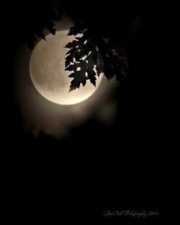 Night Magic--