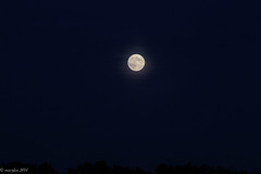Super Moon Rising (marylea) Tags: sky moon night fullmoon harvestmoon 2014 sep8 supermoon