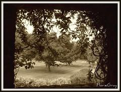 2103935350_c92cef89e5_o (gray.florie) Tags: shadow garden vines thoughtless naturewatcher floriegraysummerhouse appenninosettentrionalealpinatura florencegray floriegrayflorencetomasulograytomasulofloriegrayfloriegraycom