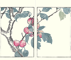 Plum (Japanese Flower and Bird Art) Tags: flower art japan japanese book picture plum woodblock kawamura prunus maruyama shijo rosaceae bumpo mume readercollection