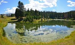 Beaver Ponds trail (vegetablepredator) Tags: park usa nature america landscape pond nikon montana unitedstates pano panoramic national yellowstone wyoming paysage panoramique etang amerique d7000