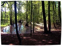Dream Forest (Klaus Franck) Tags: schleswigholstein novideo beautyisintheeyeofthebeholder kunstkreis photosandcalendar creativephotographers