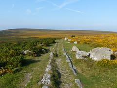 P1010348 (jrcollman) Tags: plants places devon dartmoor ulexgallii pplant pteridiumaquilinumbracken haytortohoundtor graniterailwaytrack