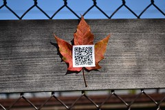 Sonnet 73, 06 (oschene) Tags: williamshakespeare qrcode northamptonma sonnet73 digitalgraffiti