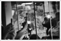Yuanmingyuan zodiac animal heads (gqhaha) Tags: bw bokeh head cellphone 100mm beast  yuanmingyuan   gqhaha