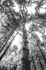 15082014-IMG_7953 (Nicola Pezzoli) Tags: trees italy nature water alberi forest canon san nicola natura val filter nd acqua viola bergamo marino manfrotto bosco foresta seriana 600d pezzoli gromo gandellino