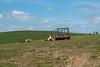 Auchindoun Cattle (M J Robinson Photography) Tags: castle landscape photography cow nikon cattle cows farm wildlife moray scotnad auchindoun d7100 nikond7100