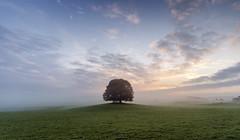 The new morning (Malajusted1) Tags: morning trees england mist tree sunrise malham skipton yorkshiredales malhamdale airton gargrave yorkshiredalesnationalpark eshton