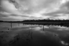 Flood plain reflections (dwimagesolutions) Tags: england essex northstafford davydownriversidepark mardyke bw nikond7200 sigma1020mmf456