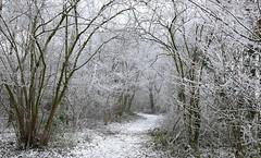 winter path (HansHolt) Tags: winter path pad frost rijp fog mist snow cold koud wood forest bos trees bomen light licht landscape landschap canon 6d canoneos6d canonef24105mmf4lisusm