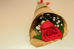 Miss You (Nourah.A.Edhbayah (Super Flower♥إظبيه)) Tags: miss you red rose nourah abdullah edhbayah kuwait q8 نورة عبدالله اظبيه الكويت اشتقت ورد احمر