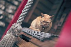 平溪遊-侯硐貓街 (Sam's Photography Life) Tags: 平溪 天燈 貓同 貓硐 基隆 老街 台灣 鄉村 部落 風景 小品 人文 生活 自然 寵物 台北 北台灣 canon 1dx 50mm art 1635 貓低 貓咪 cat pet