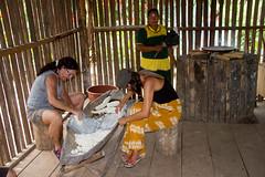 Grinding the Yuca root to flour IMG_9921 (grebberg) Tags: community sionalodge rainforest puertobolivar sionaindiancommunity cuyabenoreserve amazon ecuador january 2017 cuyabenoriver yuca cassava manihotesculenta