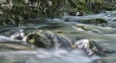 Loch Ness (sebastiengobbie) Tags: rivière river arc aixenprovence lochness longexposure expositionlongue 120s lumix gx8 panasonic eau water sunllight sun france europe green vert nature