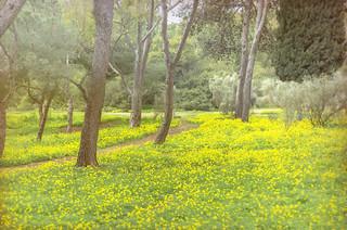jlvill  482  Primavera temprana