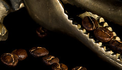 Nutcracker (Tylahfoo) Tags: coffee crocodile nut nutcracker antique