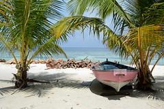 Omadhoo / އޮމަދޫ (Maldives) - Boat (Danielzolli) Tags: omadhoo maldives malediven dhivehi maldive maldivas maldivi мальдивы އޮމަދޫ alifdhaal alifudhaalu alifu dhaalu atol atoll insel wyspa ostrov ostrvo otok island eiland île isla остров beach strand playa plage plaż piaggia plaża palme palmera palm пляж