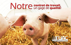 Provimi (TUAC Québec) Tags: livestock populationexplosion piglet meal domesticpig pigpen cute pork staring looking pinkcolor small agriculture nature ruralscene outdoors closeup hay snout pig mammal animal farm barn meat food husbandry pigstry pigfarm