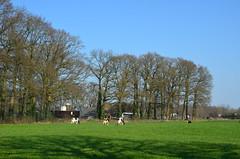 Holland landscape (JaapCom) Tags: jaapcom wezep landscape landschaft trees fee farmhause natural naturel dutchnetherlands