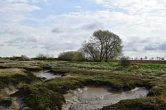 Paglesham Creek: Low tide (chemodan) Tags: uk essex paglesham church end river roach riverroach saltings valley way
