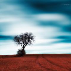 Solitaire (Stéphane Sélo) Tags: fleursetplantes france pentax pentaxk3ii printemps ain arbre blending champ ciel landscape nature nuage paysage solitaire