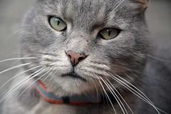 cat (elka.) Tags: chat cat gata kot katze neko nikon animal outdoor katte katt kat gatta gato germany γάτα кошка котка feline кошки