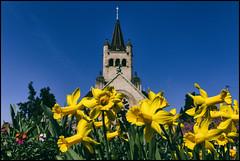 _SG_2017_03_7020_IMG_5459 (_SG_) Tags: basel basle schweiz suisse switzerland frühling spring grün green frühlingsbote blumen flowers church kirche pauluskirche pauluskirchepaulus pauluschurch