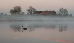 Swan lake (Jorden Esser) Tags: nederlandvandaag a4highway blackswan buildings farm fog fowl mist swan trees water rural basin serenity serene dawn