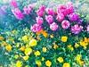 BAHAR IŞILTISI (murathanduran1) Tags: büyükçekmece bahar spring istanbul türkiye turkey fotoğraf photo çiçekler flowers