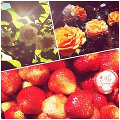 Enjoy the spring & strawberries.  #spring #strawberry #flower #sunshine