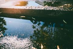 Morning Reflections (Simson_Petrol) Tags: road street morning light urban sunlight berlin sunrise concrete early xpro cityscape pavement roadtrip urbanexploration citylights fujinon mirrorless xpro1 vsco xtrans fujixpro vscofilm filmy1