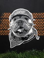 Errar es de humanos, perdonar es de perros (Juegasiempre) Tags: street urban art painting graffiti calle stencil colombia arte bogotá bulldog perro perros animales urbano calado estencil arteurbano estarcido bogotastreetart djlu juegasiempre