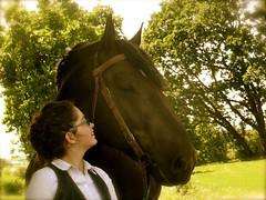 2014 complicity (3) (Marie Jestin) Tags: horse france nature animals cheval brittany bretagne natura breizh panasonic stallion breton chevaux drafthorse finistère chevalbreton