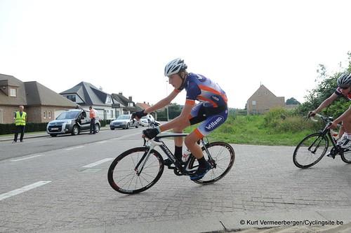Geel Oosterlo  (243)