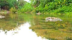 Crrego central de Sorriso (Filipi Portela) Tags: brazil nature rio gua brasil agua natureza sorriso reflexo mato matogrosso grosso americadosul crrego s4zoom