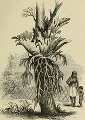 Anglų lietuvių žodynas. Žodis malacca cane reiškia malakos cukranendrių lietuviškai.