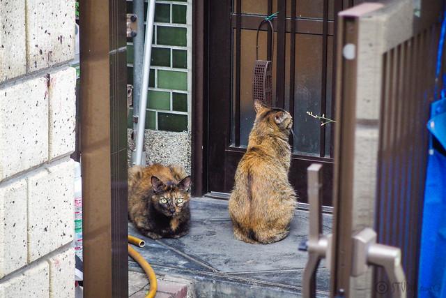 Today's Cat@2014-07-11
