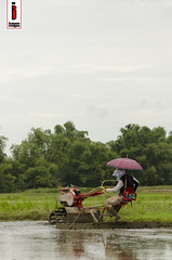 Halang/Linang 09 (Soil Cultivation) (ilusyonimages) Tags: street tractor asian photography asia farm philippines farming images illusion filipino farmer ricefields handtractor ilusyon