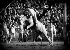 De oficio jinete (Eduardo Amorim) Tags: horses horse southamerica caballo uruguay cheval caballos cavalos prado montevideo pferde cavalli cavallo cavalo gauchos pferd hest hevonen chevaux gaucho 馬 américadosul montevidéu häst uruguai gaúcho 말 amériquedusud лошадь gaúchos 马 sudamérica suramérica américadelsur סוס südamerika jineteada حصان άλογο americadelsud gineteada ม้า americameridionale semanacriolla semanacriolladelprado eduardoamorim ঘোড়া