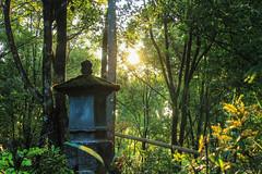 Munduk Forest - Bali (marcreynier) Tags: voyage travel colour indonesia landscape asia market roadtrip paysage indonesie