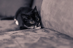 I'm New Here (zarlock81) Tags: cats pets james canon6d