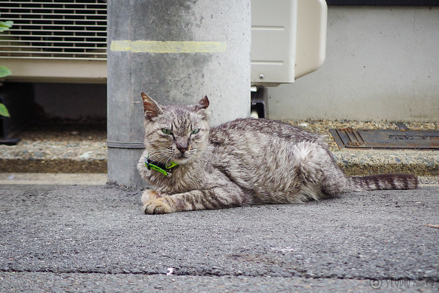 Today's Cat@2014-07-23