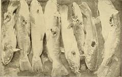 Anglų lietuvių žodynas. Žodis rock sunfish reiškia roko sunfish lietuviškai.