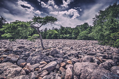 Pitch Pine and Boulders, 2014.07.18 (Aaron G. Campbell) Tags: statepark summer sky nature clouds landscape outdoors pennsylvania horizon july 18th textures faded c