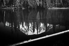 Mt Rainier the wonderful (Ackermans Finest Photography~ ( see the Sets+) Tags: flowers reflection washington mt lakes rainier
