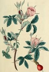 Anglų lietuvių žodynas. Žodis calyx tube reiškia taurelė vamzdelio lietuviškai.
