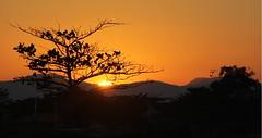 Árvore (Tree) (Roni Doerr) Tags: thebestofmimamorsgroup theoriginalgoldseal magicmomentsinyourlife magicmomentsinyourlifelevel2 magicmomentsinyourlifelevel3 magicmomentsinyourlifelevel4